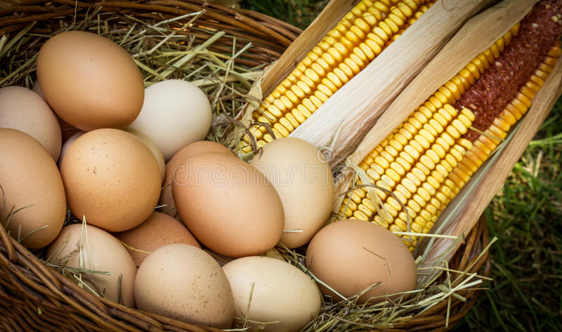 Download Organic eggs stock image. Image of fresh, speckled, eggs - 25347841