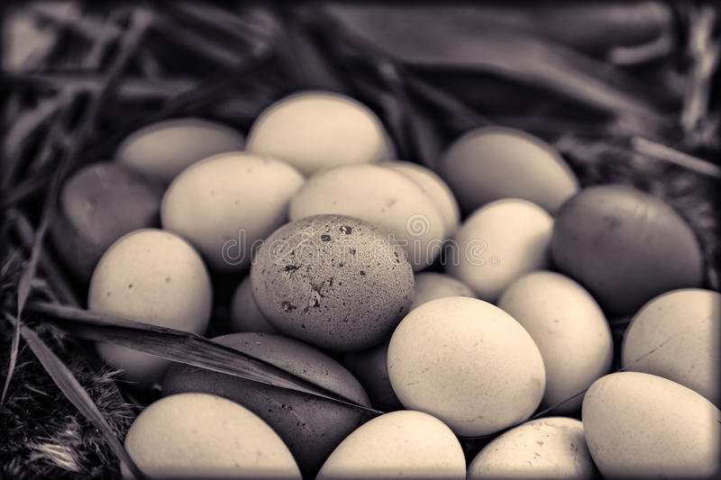 Organic eggs in basket. Image of a basket of organic eggs royalty free stock photo