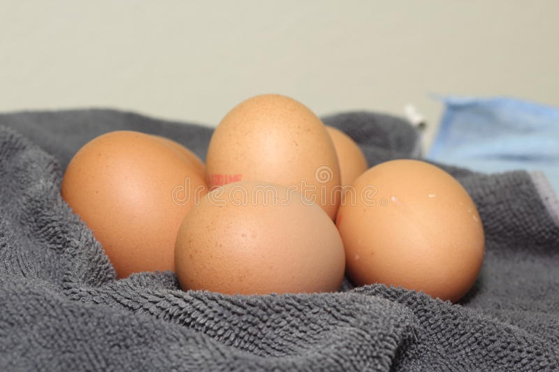 Organic eggs. In the Chamois cloth royalty free stock image
