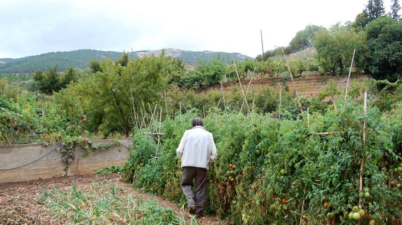 Download Organic Farmer Editorial Image - Image: 26526030
