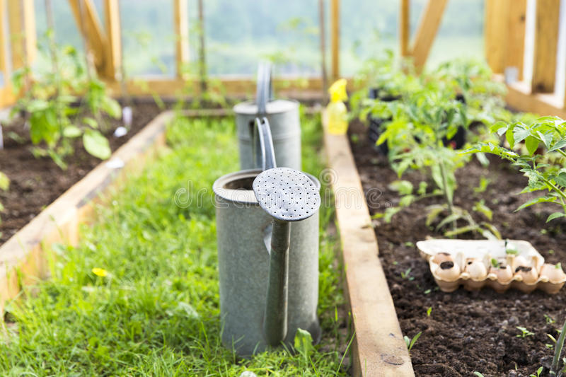 Organic farming, gardening, agriculture concept. watering can in greenhouse. Nature stock photos