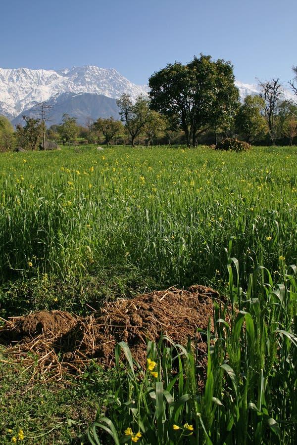 Organic farming & rural agric stock photo