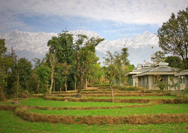 Organic farming & rural agricu royalty free stock photo