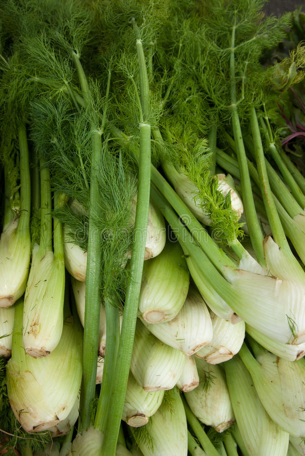 Organic Fennel. At a farmer's market stock photo