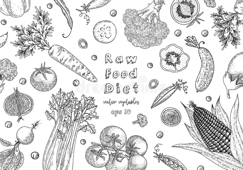 Organic food design template. Fresh vegetables. Detailed vegetarian food drawing. Farm market product. Great for label royalty free illustration