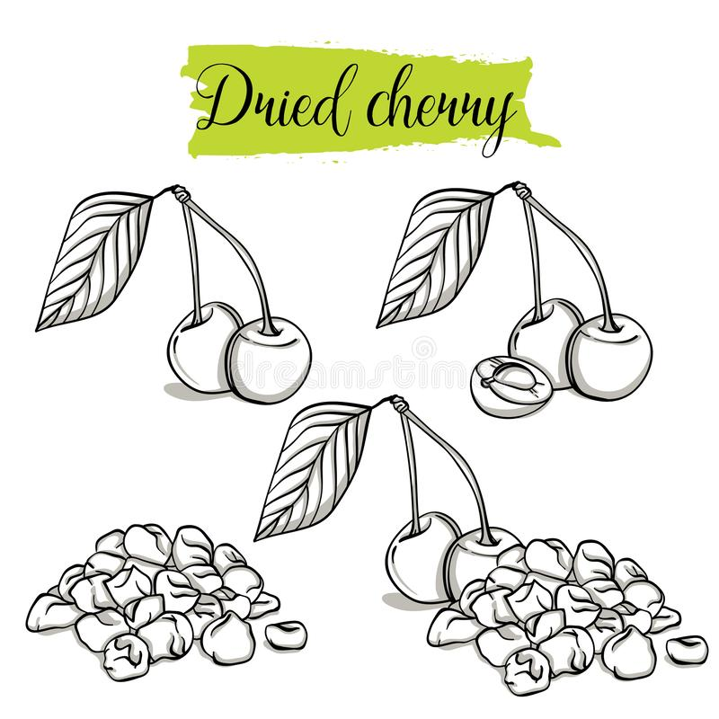 Hand drawn sketch style Cherry set. Single, group fruits, slices, dried Cherry. Organic food, vector doodle illustrations collection isolated on white vector illustration