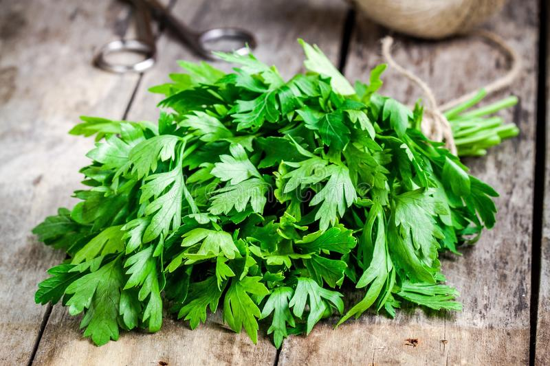 Organic fresh bunch of parsley closeup. On a wooden rustic table stock photo