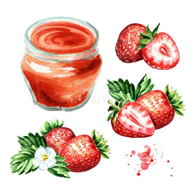 Organic fruit jam set. Glass jar of strawbery marmalade and fresh fruits isolated on white background. Watercolor hand drawn illu vector illustration