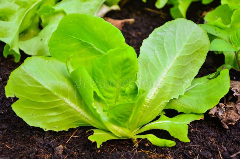 Organic Gardening stock image