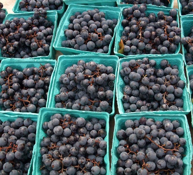 Organic Grapes stock image