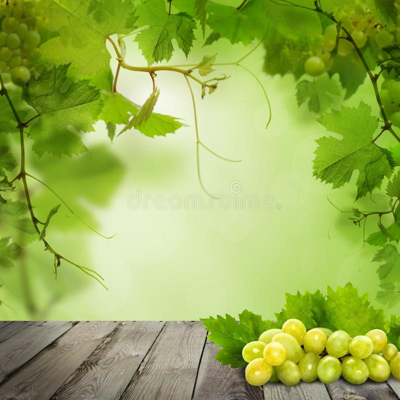 Organic grapes on old gray wooden board against abstract green leaves background.  stock illustration