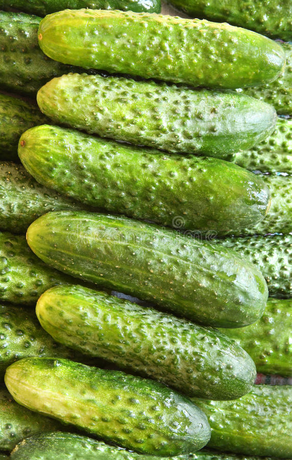 Organic green cucumbers stock images