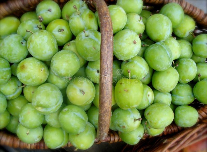 Organic Green Plums royalty free stock photo