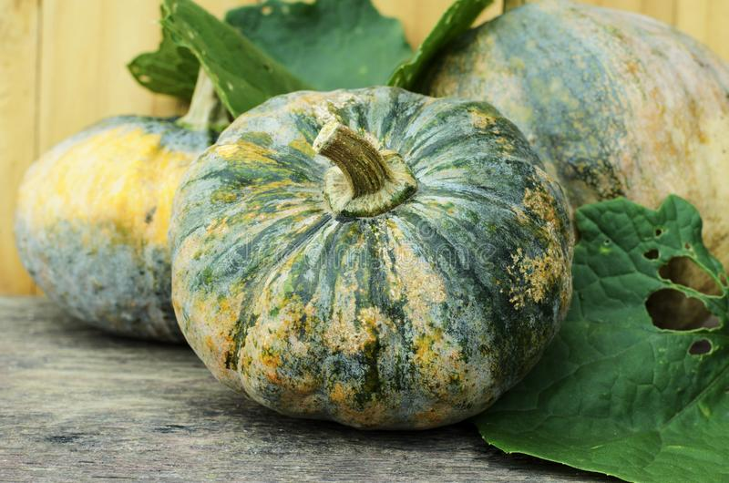 Organic green pumpkin vegetable with macro close up for raw food concept. Organic green pumpkin vegetable with macro close up for raw food stock images