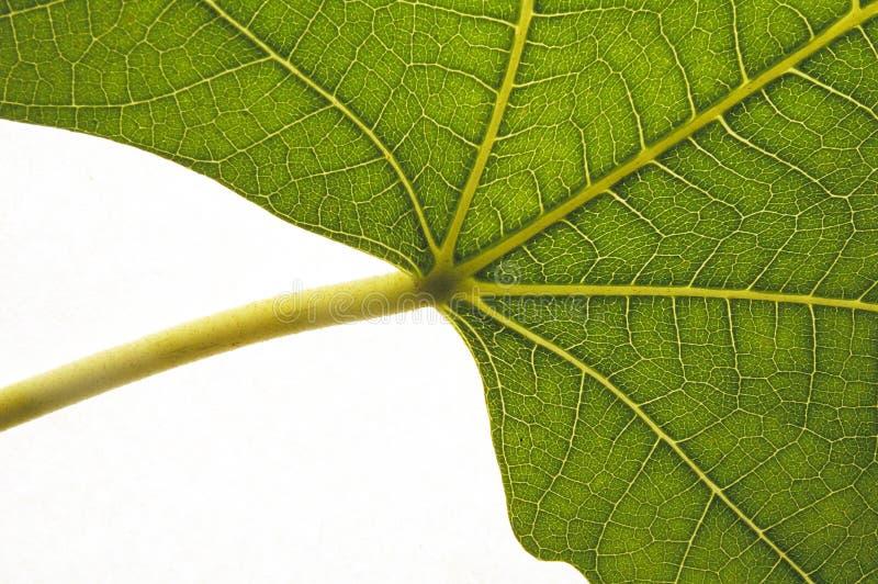Organic Growth Royalty Free Stock Image