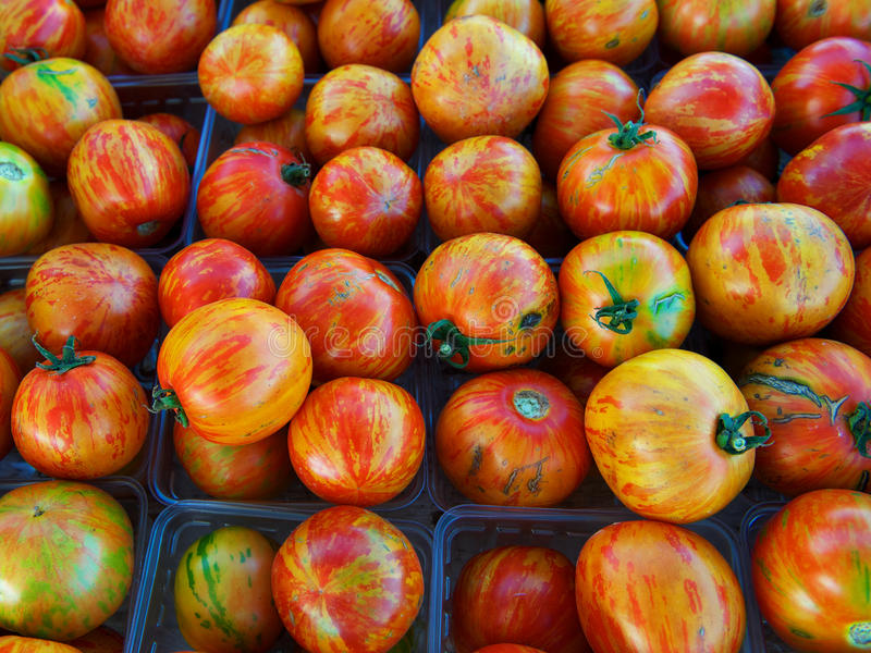 Organic heirloom tomatoes. Large group of multicolored, organic heirloom tomatoes at farm market stock photos