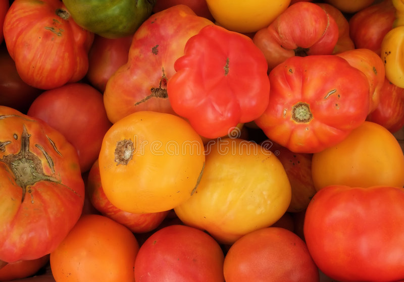 Organic Heirloom Tomatoes. Colorful Organic Heirloom Tomatoes at Farmers Market stock image