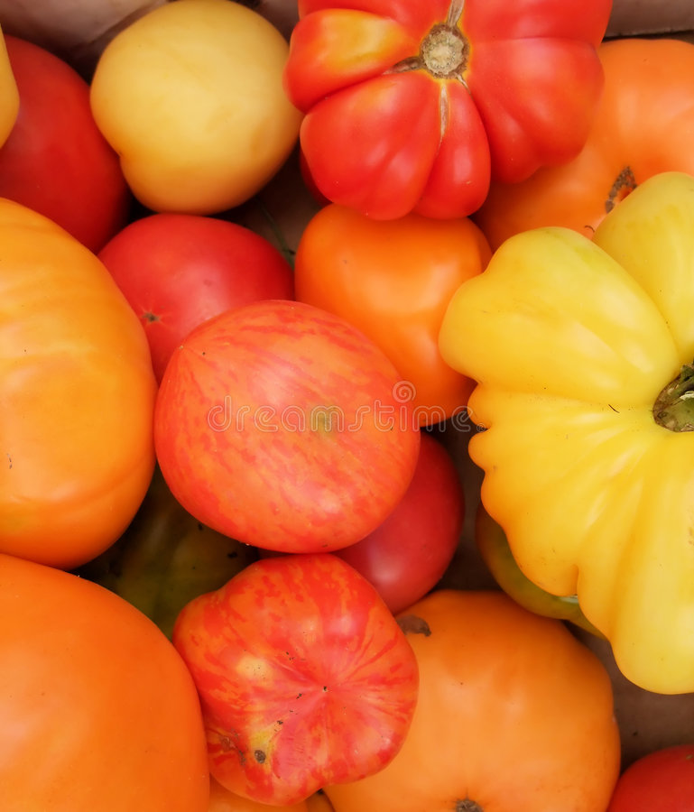 Organic Heirloom Tomatoes royalty free stock images