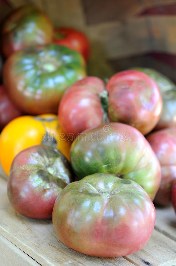 Organic heirloom tomatoes stock photos