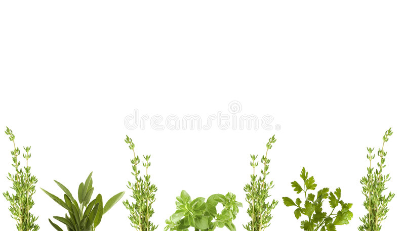 Organic herb border royalty free stock photography