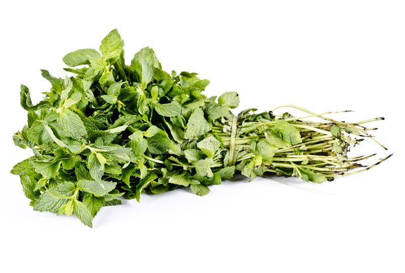 Organic herb Mint fresh bunch stock photography