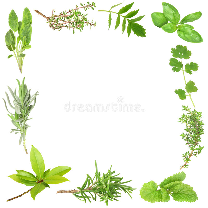 Free Organic Herbs Stock Photography - 5430042