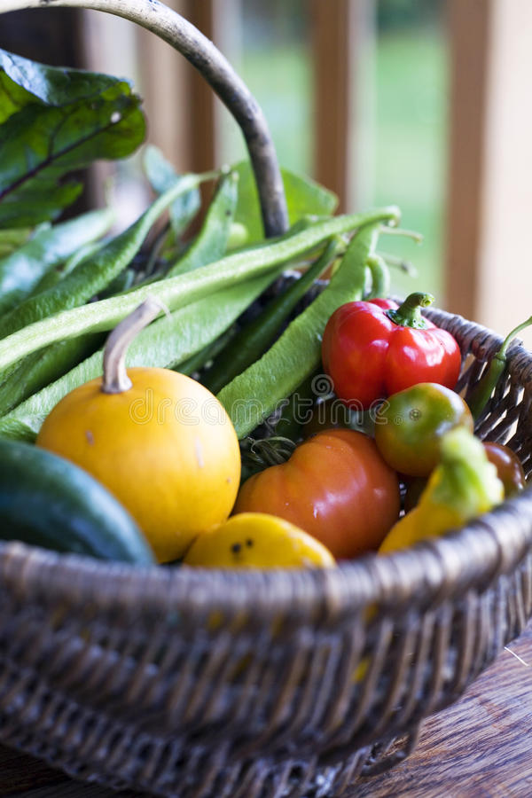 Organic home grown vegetables. Home grown vegetables on farmhouse kitchen table royalty free stock photography