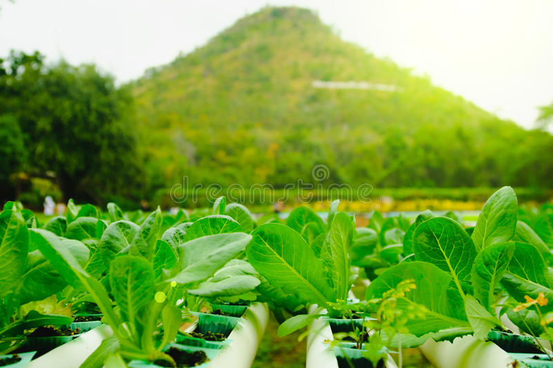 Organic hydroponic vegetable cultivation farm at countryside, Thailand stock photos