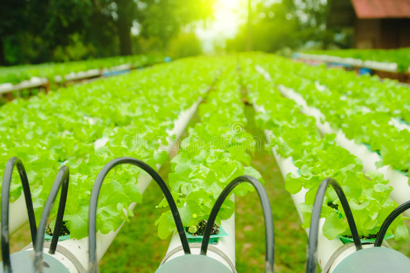 Organic hydroponic vegetable cultivation farm at countryside, Thailand stock images
