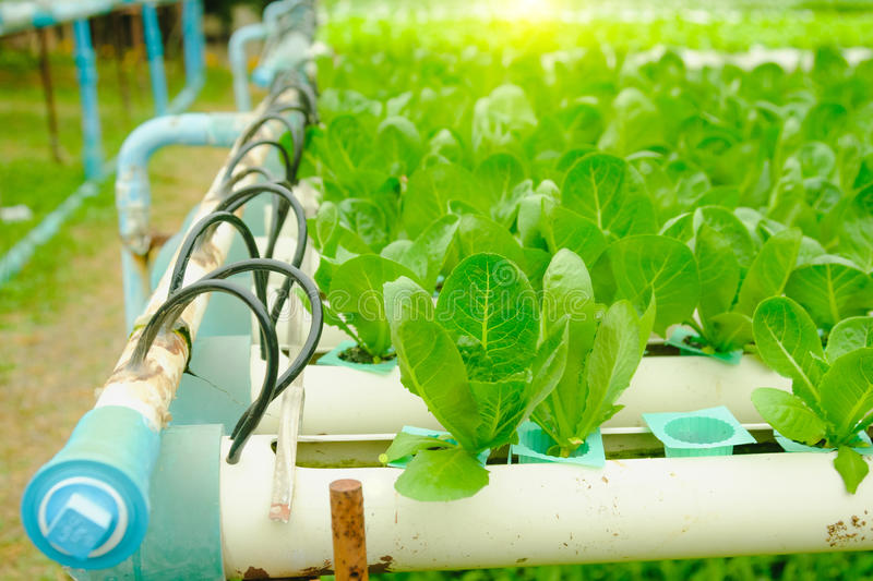 Organic hydroponic vegetable cultivation farm at countryside, Thailand royalty free stock image