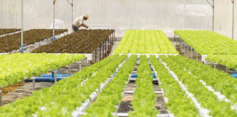 Organic hydroponic vegetable garden.  royalty free stock photo