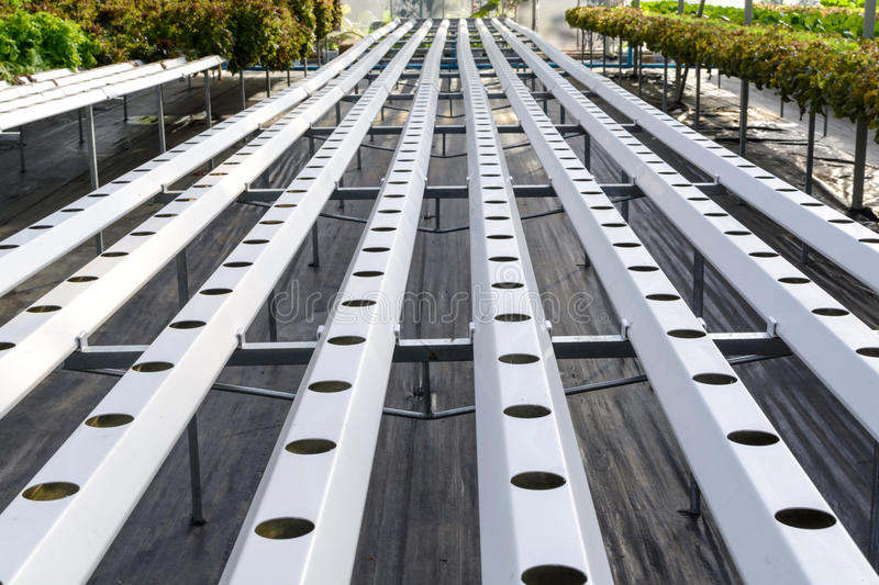 Organic Hydroponic vegetables plantation system in Hydroponics f. Arm royalty free stock image