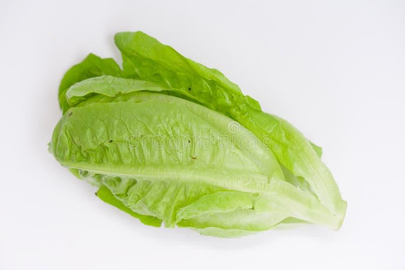 Download Organic lettuce stock photo. Image of salad, green, food - 10631934