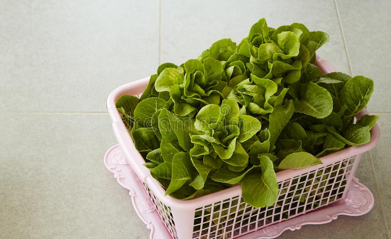 Organic Lettuce in a Basket royalty free stock images