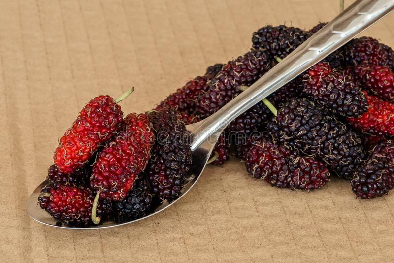 Organic Mulberry fruits in Stainless steel spoon. And many pile of Mulberry friut on brown cardboard background stock images
