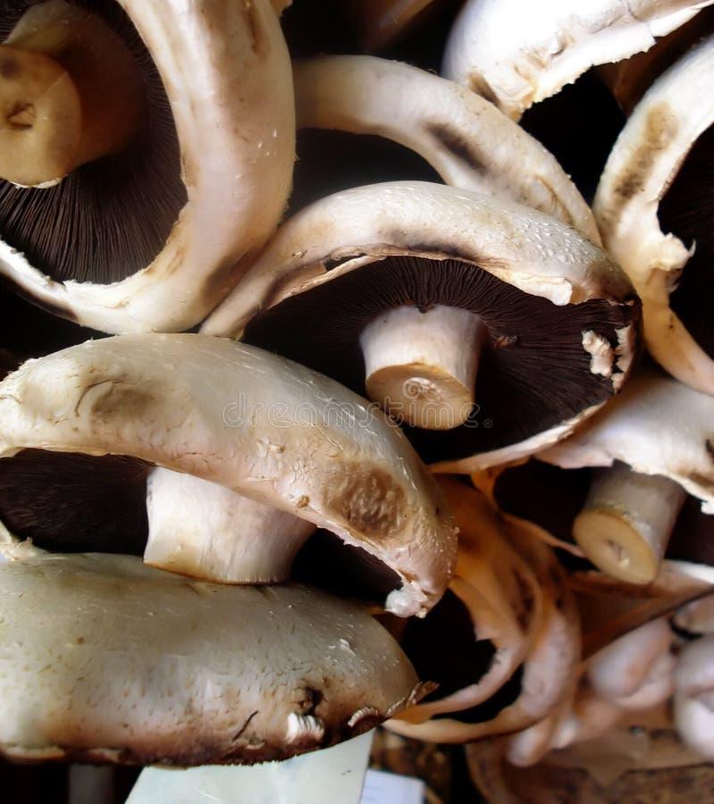 Organic Mushrooms stock image