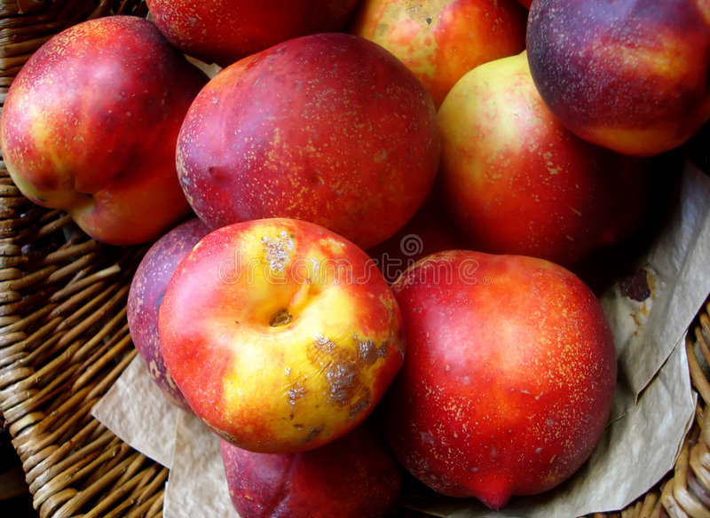 Organic Nectarines royalty free stock photography