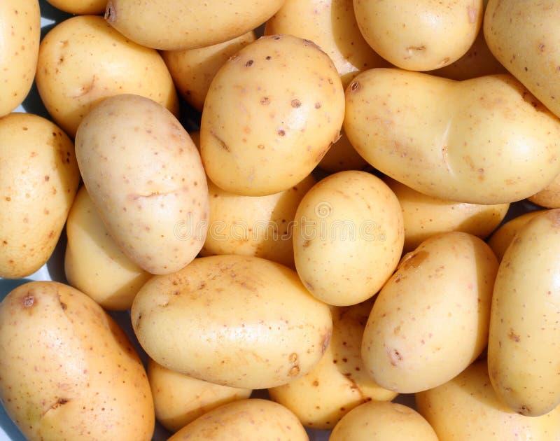 Organic new potatoes. stock image