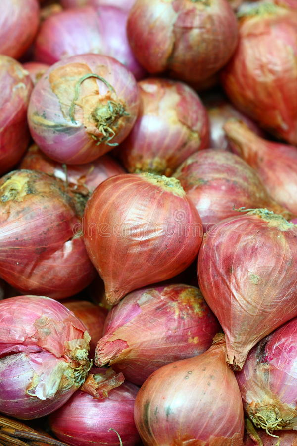 Download Organic onions stock photo. Image of vitamin, background - 18478858