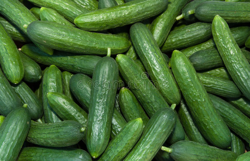 Organic Persian Cucumbers stock photo