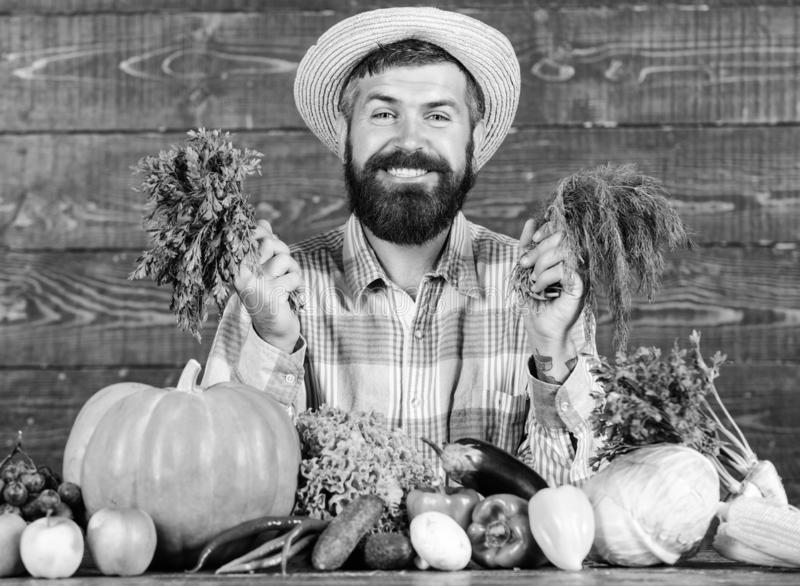 Organic pest control. Man with beard proud of his harvest wooden background. Excellent quality harvest. Organic royalty free stock images