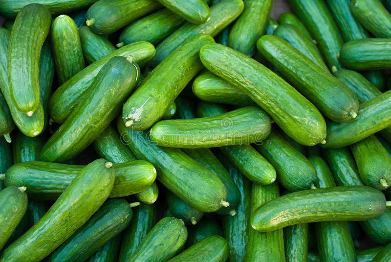 Organic Pickle Cucumbers stock photography