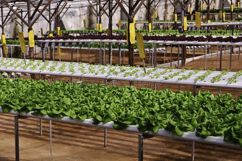 Organic Plantation Royalty Free Stock Photography
