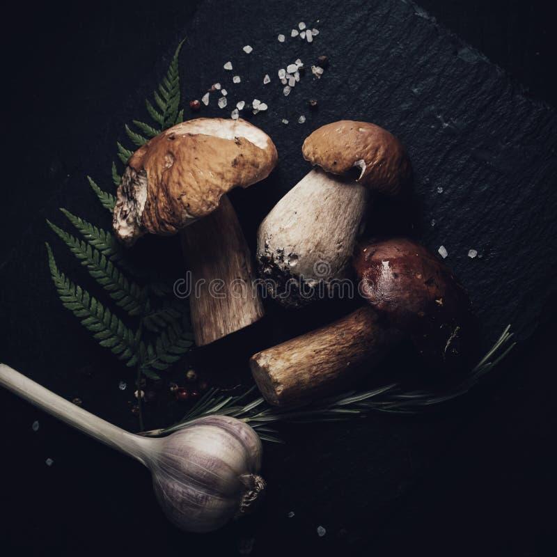 Organic porcini mushroom seasoning forest on black background . stock photo