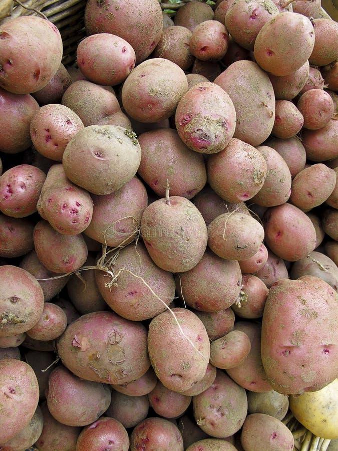 Organic potatoes at Farmers Market royalty free stock photos