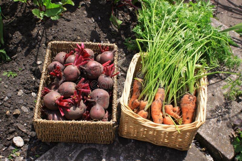 Organic Produce royalty free stock photo