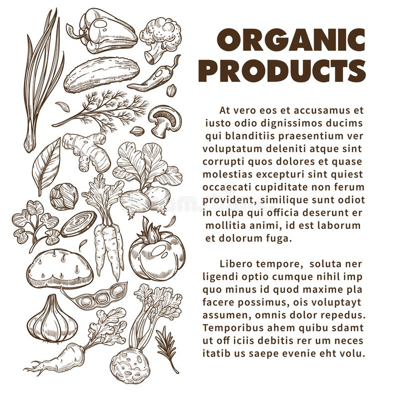 Organic products banner with hand drawn vegetables and text royalty free illustration