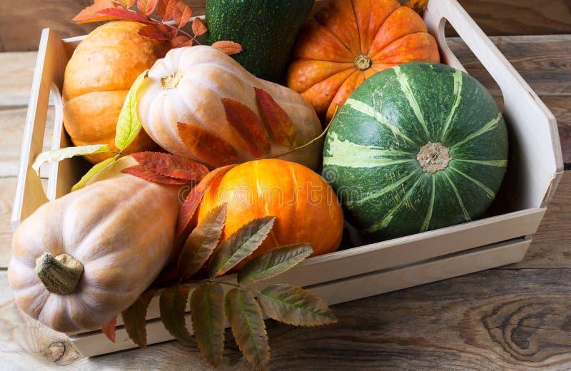 Organic pumpkins in wooden box stock image