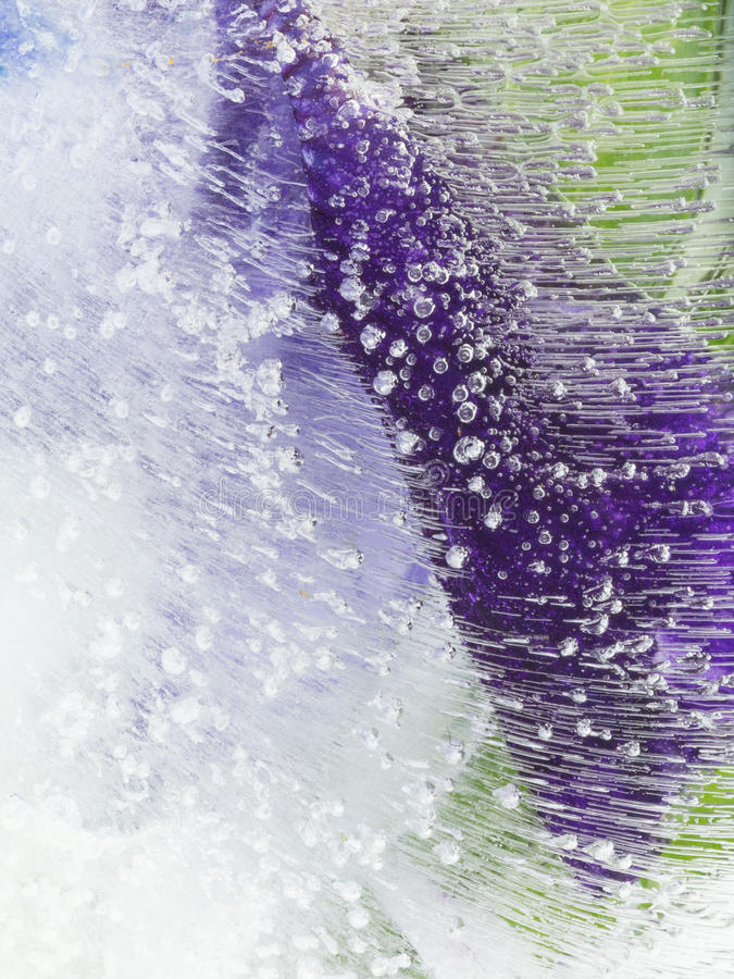 Organic purple green abstraction. Bright beautiful delicate purple and green abstract organic frozen in water with air bubbles royalty free stock images