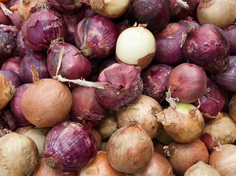 Organic purple and white onions stock photography